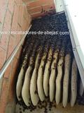 Abejas Pet rescue enjambres rescate - foto