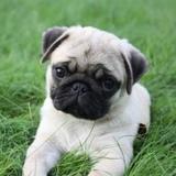 Mil Anuncioscom Pequeños Compra Venta De Perros Pequeños Regalo