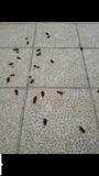 Fumigacion plagas,cucarachas,termitas - foto