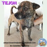 MIL ANUNCIOS COM - Tejon  Compra-venta y regalo de mascotas