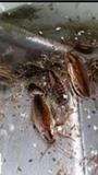 Control de plagas cucarachas hormiga sur - foto