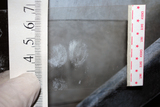 Investigador-Detective. TIP: 1231 - foto