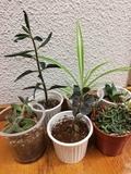 LOTE 5 PLANTAS - foto
