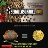 SEMILLAS CANNABIS DE 0. 50  A 1 - foto