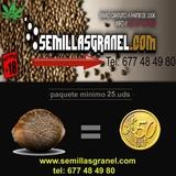 SEMILLAS CANNABIS DE 0, 50 A 1 - foto