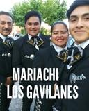 Mariachi Los Gavilanes 685357092 - foto