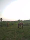 Fotos con caballos - foto