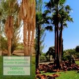 palmeras y jardines - foto