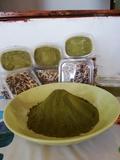 Moringa olifeira - foto