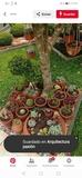 jardinero corta césped mantenimiento - foto