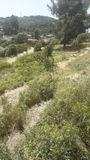 servicios forestales y jardinería - foto