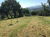 Mantenimiento de pumaradas en Asturias - foto