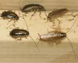 eliminamos plaga de cucarachas - foto