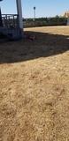 limpieza de parcelas.i terrenas - foto