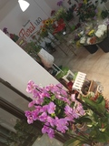 Venta de plantas y flor cortada - foto