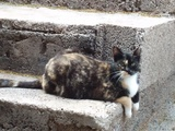 Mil Anuncios Com Adopcion Compra Venta De Gatos Adopcion En