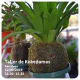 Taller de Kokedamas - Plantas sin tiesto - foto