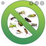 Control de plagas oferta aa!!!! - foto