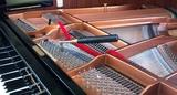 Piano Tuner - foto