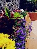 Jardinero Economico - foto