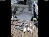 salidas de pesca en Barco Calpe - foto