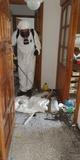 Limpiezas tras ocupación Lanzarote - foto
