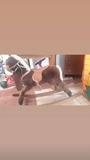 caballo balenseable - foto