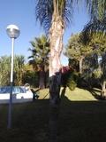 Se podán palmeras - foto