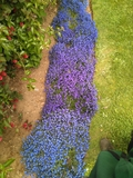 jardinero autonomo - foto