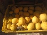 limones - foto