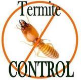 Termitas. garantia - foto