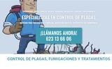 Control de Plagas en Madrid - foto