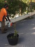 Jardineros Ibicencos San José - foto