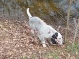 Cambio cachorro cruce azul - foto