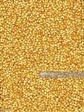 Maíz blanco,Maíz amarillo,cebada,trigo. - foto