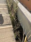 Reparación de tejados y cubiertas - foto