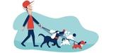 Paseador de perros y cuidador - foto