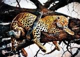 LAMINAS ANIMALES SALVAJES.  LEOPARDO - foto