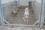 Ocasión varios perros caza de conejos - foto