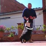 Educador Canino Profesional ofrece sus s - foto