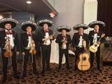 mariachis todo el año 683.270.443 - foto