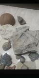 piedras fósiles - foto