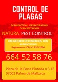 Control de plagas en Mallorca - foto