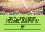 SE COMPRAN DERECHOS DE LA PAC - foto