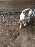 perro cazando economicos - foto