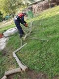 podador de árboles - foto