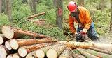 Servicios forestales vacor sl. - foto