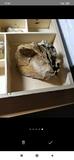 Fósiles - foto