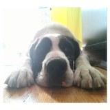 Paseos de perros Vallecas - foto