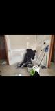 Reparaciones, arreglos en viviendas - foto